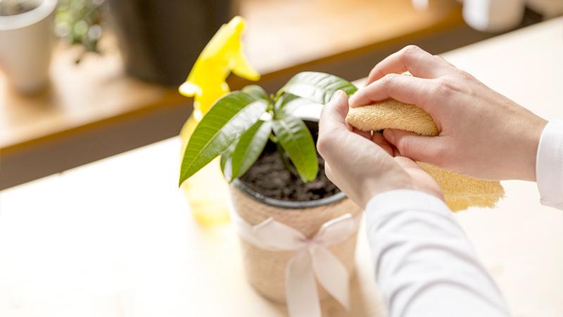 pulire le foglie di una pianta