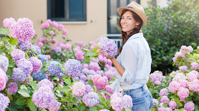 Ortensie, tips&tricks per arredare casa con i fiori secchi